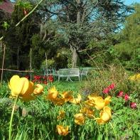 Der große Baum hinter den Bänken ist eine Zeder - hier im Frühjahr 2012