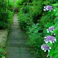 """Viele Leute kommen hier her, gerade WEIL es hier so verwunschen, urwüchsig und naturbelassen ist, das findet man heute kaum noch irgendwo ... Die Stadtgärten schneiden lieber alles auf """"Kante""""!"""