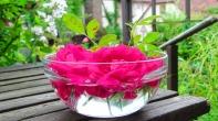 Rose im Glas - Ein Geschenk