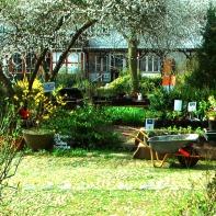 Der Gartenhof im Frühjahr ... ein kleines Wunderland...