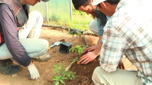 Kein Dünger, keine Chemie, die Shumei´s sind Teil des Hofes und pflanzen vorbildhaft.