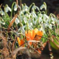 Frühling auf dem Gartenhof