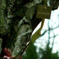 """Auch anderen Orts wurde dieser Tage der einsam Verstorbenen gedacht. So trafen sich zahlreiche Hinz & Künztler am Totensonntag unterm gemeinsamen Gedenkbaum für alle verstorbene Verkäufer der Straßenzeitung """"Hinz & Kunzt""""."""