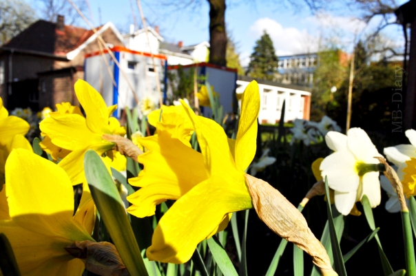 Wohncontainer auf dem Kirchengelände der Gemeinde St. Peter im Hamburger Stadtteil Großborstel (Foto: Max Bryan)